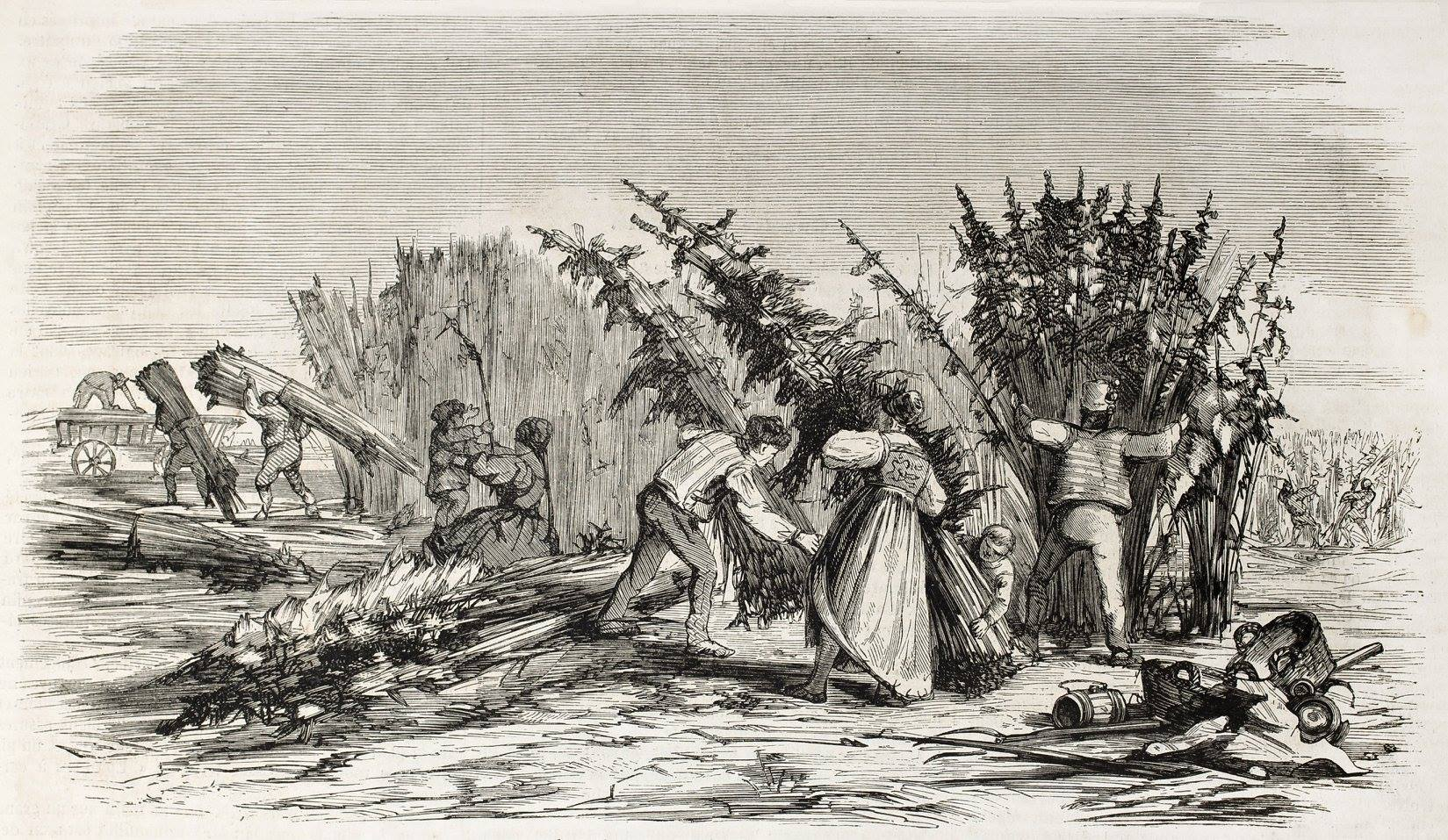 Illustration of History of Cannabis: People harvesting cannabis in America