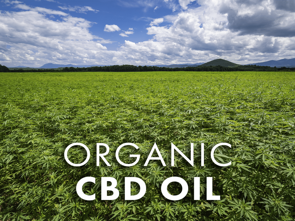 Dragonfly CBD Organic CBD Oil Why you should buy Organic CBD Oil