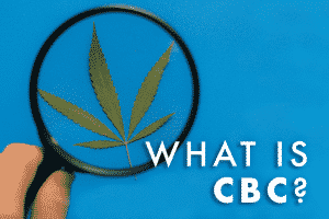 what is cbc with magnifying glass and cannabis leaf on blue background
